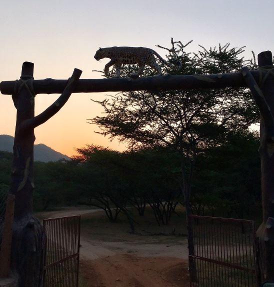 Jhalana Safari Park