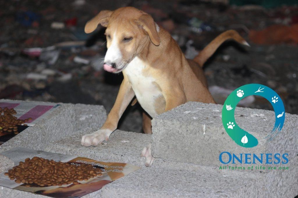 NGOs feeding stray animals