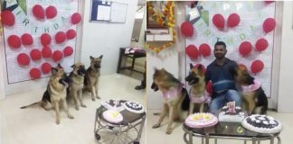 police dogs celebrate their first birthday