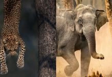Indian Wildlife Photographers