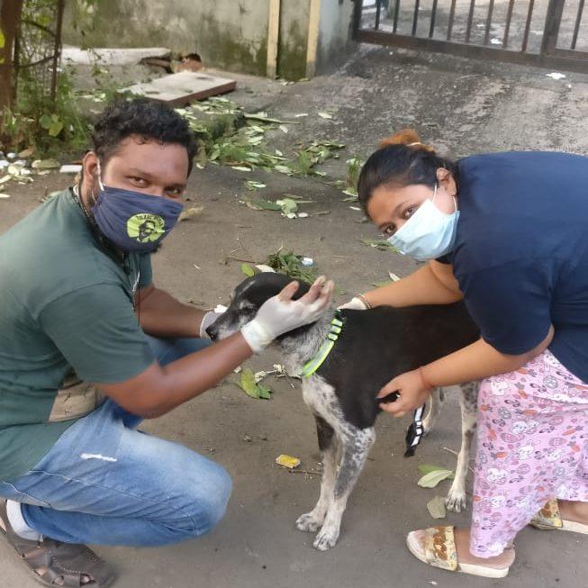 Mumbaikars feeding stray dogs
